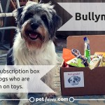 BullyMake Subscription Box- For Dogs Who Are Tough On Toys