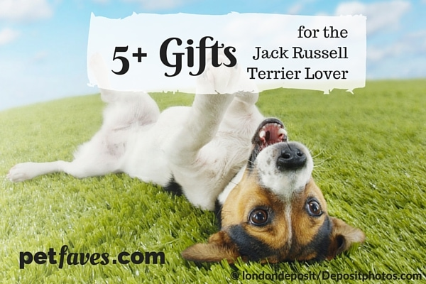 Intelligent, loyal, ready for anything. Is it any wonder that we love Jack Russell Terriers so much? Enjoy these 5+ gift ideas to show your love for JRTS.