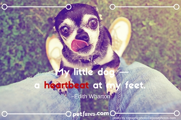 My little dog — a heartbeat at my feet. ~Edith Wharton
