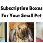 Don't let dogs and cats have all the fun! Check out this list of subscription boxes for rabbits, ferrets, birds, guinea pigs and other small pets to find one for your other pets.