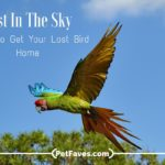 Lost In The Sky- Steps To Get Your Lost Bird Home