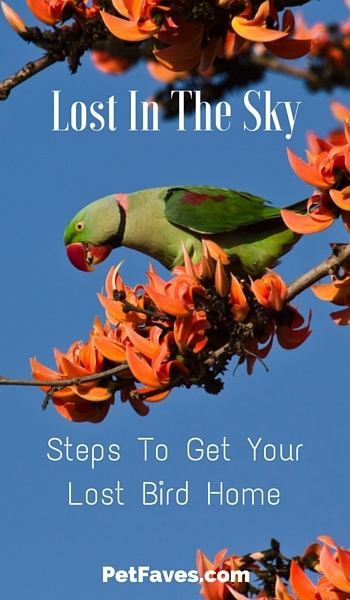 Lost In The Sky: Steps To Take To Get Your Lost Bird Home