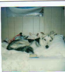 My first dog Whitney