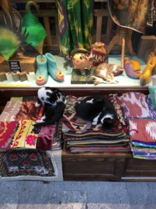 Meow Lifestyle Cats of Istanbul