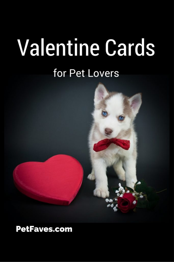 They call it Puppy Love! Or is it Kitty Love? Show your love with these Valentine Cards for Pet Lovers | Valentine's Day | Holiday | Celebration | Pet Cards |