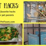 My 3 Favorite Pet Hacks that Make A Pet Parent's Life Easier