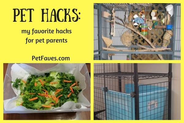 Pet Hacks- my favorite hacks for pet parents