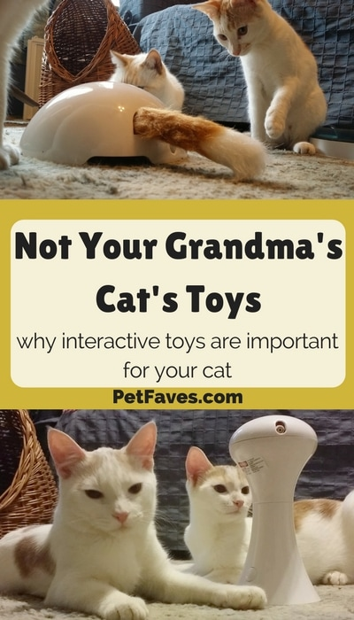 Interactive cat toys encourage cat to play and benefit them in several ways. | PetFaves.com | Cat Products | Motorized Cat Toys |