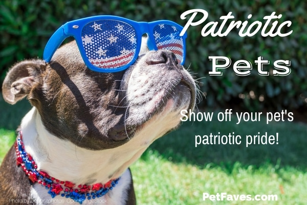 The 4th of July is a time to celebrate our country. Here are some products to help your pets show their patriotic pride.