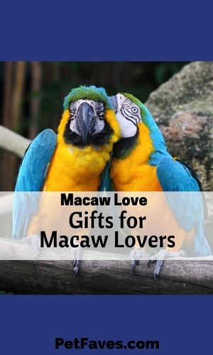 Colorful, majestic, a bit comical. Sometimes it's hard to believe birds like macaws actually exist in the wild. But then when you see them in their natural habitat, you can't imagine them anywhere else. Their beauty and glory shine even brighter.  Even if don't have a macaw in your life, you can enjoy their beauty with one of these Macaw gift ideas.