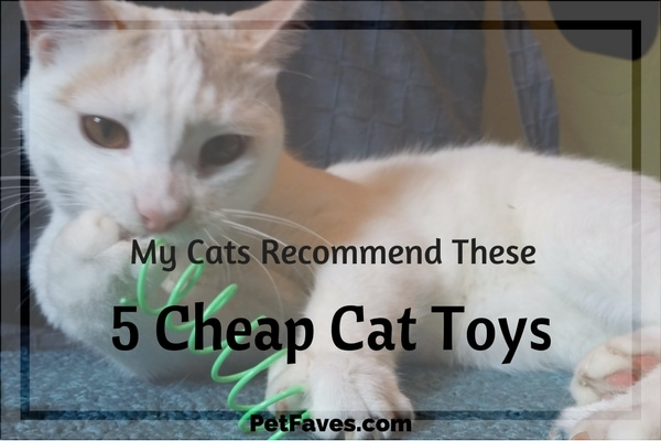 Cat fun doesn't have to be expensive. We share 5 of our favorite cheap cat toys you'll want to add to your cat's toy box.