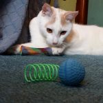 5 Cheap Cat Toys My Cats Recommend