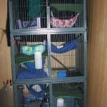 Midwest Ferret Nation Cage