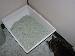 The Biddy Cat Easy-Scoop Litter Box
