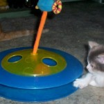 Petstages Cheese Chase Cat Toy