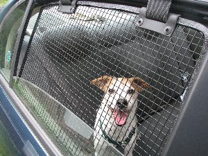 BreezeGuard Car Window Screens let your dog enjoy the breeze while keeping them safely confined in your car.