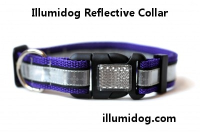 Illumidog Reflective Collar Purple