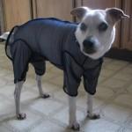 DoggyHairNet Review