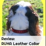 RUHA Leather Collar- Looking for a stylish leather collar for your dog? The RUHA collar is one you should look at. See what we thought of it in our review.