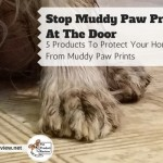 Stop the Muddiness! (5 Products That Stop Muddy Paw Prints)