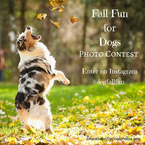 Fall Fun for Dogs Photo Contest
