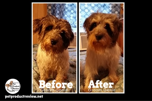 Groom Genie Before & After