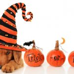 5+ Spooktacular Halloween Costumes For Dogs