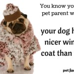 You Know You're A Pet Parent When…Who dresses better?