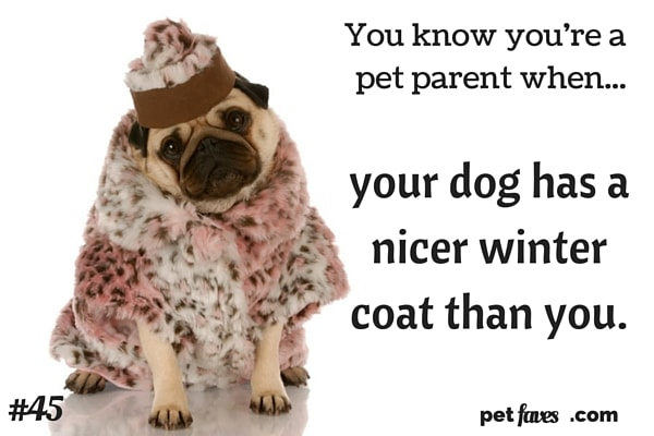 You know you're a pet parent when... your dog has a nicer coat than you.