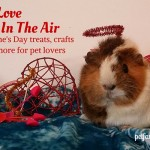 Pet Love Is In The Air