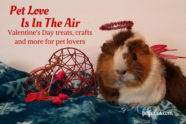 Valentine's treats, crafts and more for pet lovers.