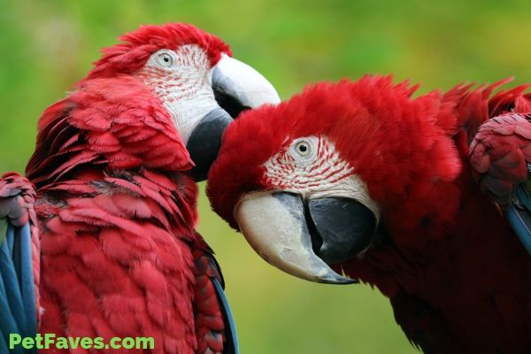 macaw parrots waiting for their parrot subscription box
