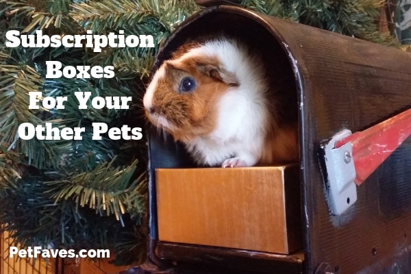 Guinea pig with subscription box inside mailbox