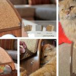 Kickstarting the Quicksnap Cat Scratcher
