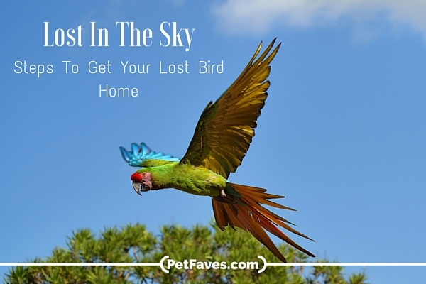 Lost In The Sky: Steps to Get Your Lost Bird Home
