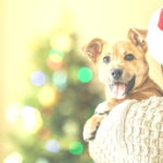 Personalized Gift Ideas for Pet Lovers