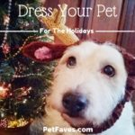 Get your pet ready for the holidays with these holiday apparel ideas. From Christmas bandanas to holiday formal wear, there is something for every pet.