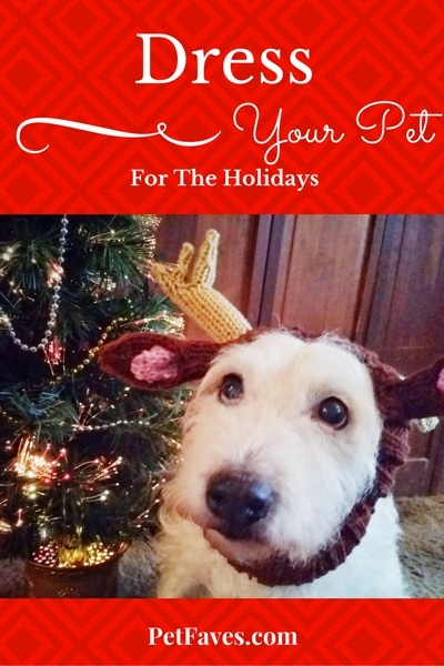 PetFaves.com | Get your pet ready for the holidays with some of these holiday apparel ideas. From Christmas bandanas to holiday formal wear, there is something for every pet.