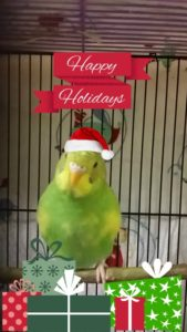 PetFaves.com | Get your pet dressed for Christmas using a photo editing program. This is perfect for the pet who is too small to wear holiday garb or hates wearing clothing.