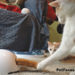 Interactive Cat Toys – Not Your Grandma's Cat's Toys