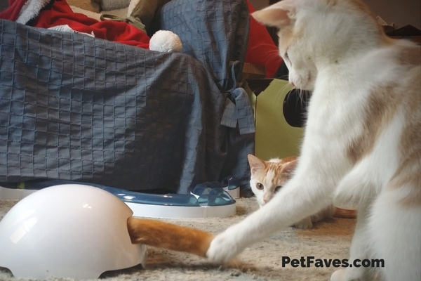 The FroliCat® Fox Den cat toy makes chittering noise while enticing your cat to play with its whirling foxtail. | PetFaves.com | interactive cat toys
