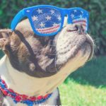 Patriotic Pets- Show Off Your Pet's Patriotic Pride