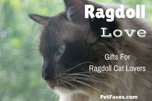 Ragdoll Love- How can you not love a cat known for being docile and affectionate? Ragdolls just take over their owners heart. You can't help but be obsessed and want to add them to more parts of your life. Here are some fun Ragdoll finds to help with the obsession.