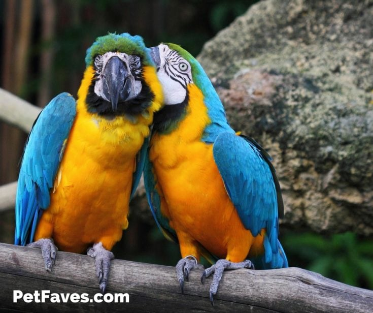 Macaw Love- Gift Ideas for Macaw Lovers