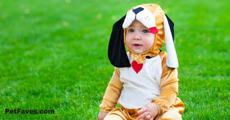 7 Cute Pet Halloween Costumes for Kids
