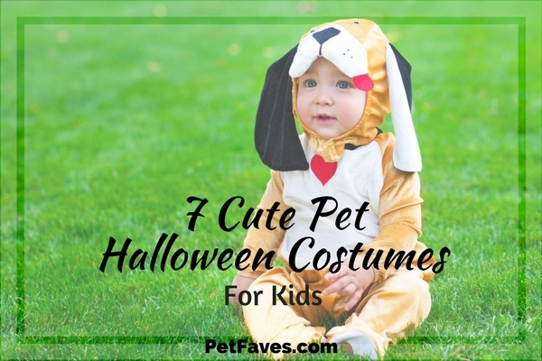 Sure, you could always put your child in a pumpkin costume. Or a scarecrow. Or the ever popular ghost.  But why would you want to when there are so many cute pet Halloween costumes that will have everyone ooohing and ahhhing and help them score the best trick or treat candy.