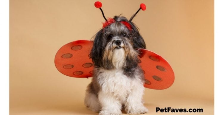 Pet Faves Picks- Halloween Costumes for Pets