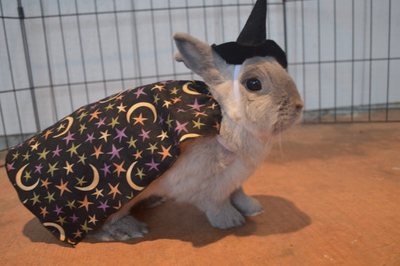 Bunny costume for Small Animals from Fancihorse on Etsy 2. Witch Costume for Small Animals from ToffeeCrafts on Etsy & Pet Faves Picks- Halloween Costumes for Pets -