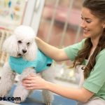 dog groomer with poodle