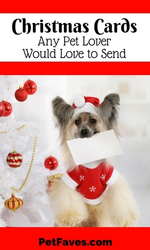 Christmas Cards Any Pet Lover Would Love to Send! Christmas cards for dog lovers, cat lovers and small animal lovers!        #christmascards  #dogchristmascards #catchristmascards #hedgehogchristmascards